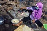 Kementan meningkatkan konsumsi jagung untuk diversifikasi pangan