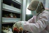 PMI Banjarnegara jamin stok darah aman selama Ramadhan