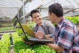 Tiga strategi bisnis agar milenial jatuh hati menjadi pengusaha tani