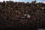 Log Pile Bouldering - 1st Prize