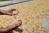 Sulawesi Tenggara tingkatan kualitas produksi rumput laut