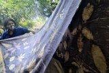 Nanik Riyanti (52), perajin batik yang juga penyandang disabilitas menunjukkan batik ecoprint hasil kreasinya di rumah industrinya di Tulungagung, Jawa Timur, Sabtu (17/4/2021). Nanik Riyanto yang mengalami cacat tangan kiri sejak lahir, terus bertahan membatik dengan metode ecoprint kendati harga jualnya mentok di kisaran Rp200 ribu hingga Rp250 ribu per lembar karena keterbatasan pasar. Antara Jatim/Destyan Sujarwoko/zk