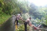 Polres Sangihe buka jalan Tahuna-Manganitu yang tertutup pohon