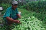 PT BPP dorong petani tingkatkan pendapatan melalui program DMPA
