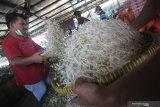 Pekerja menampi kecambah atau taoge di Pasar Induk Osowilangun, Surabaya, Jawa Timur, Selasa (20/4/2021). Menurut pedagang, harga kecambah naik dari Rp4.000-Rp5.000 per kilogram menjadi Rp8.0000-Rp10.000 per kilogram karena minimnya pasokan dari petani yang disebabkan oleh sulitnya mencari bibit kecambah. Antara Jatim/Moch Asim/zk.