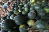 Pedagang menata buah semangka yang dijual di Pasar Induk Osowilangun, Surabaya, Jawa Timur, Selasa (20/4/2021). Menurut pedagang, penjualan buah semangka saat bulan Ramadhan yang dibanderol dengan harga Rp5.000-Rp7.000 per kilogram tersebut naik sekitar dua puluh persen dibanding hari biasanya. Antara Jatim/Moch Asim/zk.
