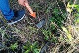 Viral bule beradegan mesum di Gunung Batur, polisi selidiki