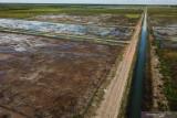 Kalsel jajaki pengembangan 'food estate' di lahan rawa