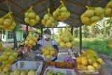 Panen Lemon Organik