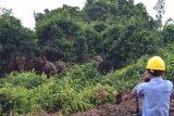 PT Bumi Mekar Hijau pastikan jaga habitat gajah sumatera