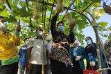 Wisatawan bisa petik buah di agrowisata Unila