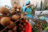 Seorang ibu membuang daun buah klengkeng dari tangkainya saat panen di Kelurahan Gladak Anyar, Pamekasan, Jawa Timur, Kamis (22/4/2021). Menurut petani, produksi klengkeng di daerah itu turun hingga 30 persen akibat mengering dan rontok karena dibungkus sejak bakal buah. Antara Jatim/Saiful Bahri/zk.