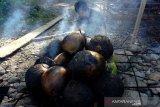 Permintaan kelapa muda bakar di bulan Ramadhan