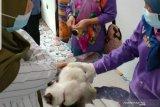 Kota Palembang tambah puskes hewan antisipasi meningkatnya kasus rabies