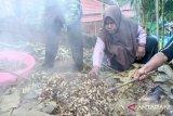 Pertamina Papua mendorong tradisi bakar batu kembali dikenal