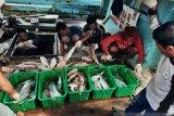 Aliansi Nelayan Natuna tolak kapal cantrang
