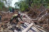 BBKSDA Riau musnahkan 500 kayu pembalakan liar Giam Siak Kecil