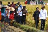 Presiden Joko Widodo (kanan) didampingi Ketua DPR RI Puan Maharani (dua dari kanan) berjalan di pematang sampah usai berdialog dengan petani dalam Kunjungan Kerja di Kanigoro, Pagelaran, Malang, Jawa Timur, Kamis (29/4/2021). Dalam kunjungan tersebut, Presiden melakukan panen raya serta memberikan bantuan bagi korban gempa Malang. Antara Jatim/Ari Bowo Sucipto/zk