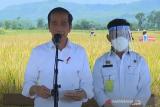 Presiden pastikan produksi padi penuhi kebutuhan  masyarakat