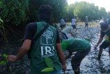Membangun kembali ekowisata mangrove di Bali di tengah hantaman pandemi