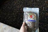 Mengungkap keunggulan Maggot sebagai bahan baku pakan ikan mandiri