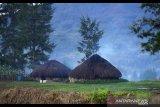 Warga Ilaga gelar ritual adat bakar honai perang suku