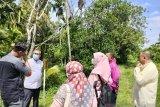 Dengan dana Rp24,3 miliar, di tempat ini  selepas lebaran akan dibangun sentra rendang terbesar di Kota Padang