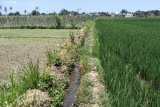 Distan Mataram: Alih fungsi lahan memicu tertutupnya saluran irigasi