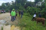Pemerintah desa/kelurahan di Gumas diminta awasi bantuan ternak yang disalurkan