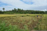 Pemkab Kulon Progo diminta menambah bantuan pupuk organik