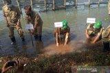 Bantul tanam seribu bibit pohon mangrove sambut Hari Keanekaragaman Hayati