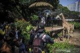 Wisatawan melihat jerapah di Bandung Zoological Garden (Bazoga), Bandung, Jawa Barat, Sabtu (15/5/2021). Selama libur Idul Fitri 1442 H, pengelola Bazoga menargetkan 6.000 kunjungan wisatawan perhari selama 10 hari. ANTARA JABAR/Raisan Al Farisi/agr