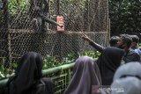 Wisatawan memadati kandang Owa Jawa di Bandung Zoological Garden (Bazoga), Bandung, Jawa Barat, Sabtu (15/5/2021). Selama libur Idul Fitri 1442 H, pengelola Bazoga menargetkan 6.000 kunjungan wisatawan perhari selama 10 hari. ANTARA JABAR/Raisan Al Farisi/agr