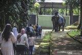 Wisatawan menaiki gajah di Bandung Zoological Garden (Bazoga), Bandung, Jawa Barat, Sabtu (15/5/2021). Selama libur Idul Fitri 1442 H, pengelola Bazoga menargetkan 6.000 kunjungan wisatawan perhari selama 10 hari. ANTARA JABAR/Raisan Al Farisi/agr
