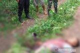 Sengketa lahan di Lampung Timur, satu korban meninggal