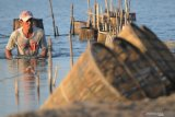 Nelayan memasang bubu udang di  perairan garam Desa Pademawu Timur, Pamekasan, Jawa Timur, Selasa (18/5/2021). Pascalibur Idul Fitri 1442 H, nelayan udang di daerah itu mulai beraktivitas kembali. Antara Jatim/Saiful Bahri/zk