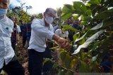 Pemkab Sigi  bantu petani untuk budidaya tanaman kopi arabica