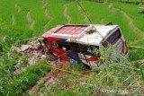 Bus angkut keluarga pengantin 'nyungsep' ke sawah, dua penumpang tewas (Video)