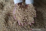 Melonjak, harga kedelai impor di Kudus Rp10.750/kg