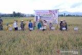 Kendari luncurkan kawasan pertanian Amohalo jadi agrowisata