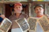 Wali nagari jelaskan soal ribuan lalat ganggu  warga Koto Tingga