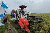 Panen padi di Lampung Selatan capai 7 ton/ha