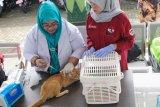 Vaksinasi rabies digelar September Kota Yogyakarta siapkan 2.250 dosis
