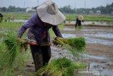 Pekerja sektor pertanian, kehutanan dan perikanan di Sulsel