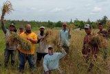 PT Rimba Hutani Mas bantu petani buka lahan tanpa bakar