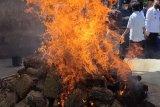 BNNP Lampung musnahkan ganja seberat 240 kg dan sabu-sabu 5 kg
