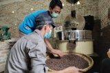 Harga biji kopi Lampung stabil pada awal musim panen raya