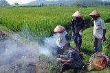 OKU Timur luncurkan gerakan pengendalian hama tanaman