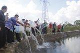 Ketua Komisi IV DPR RI tebar 200.000 benih ikan di embung Itera