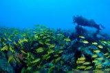 CMAS dukung Bangka-Likupang kejuaraan fotografi bawah laut
